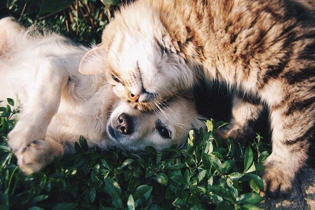 huisdier hond kat