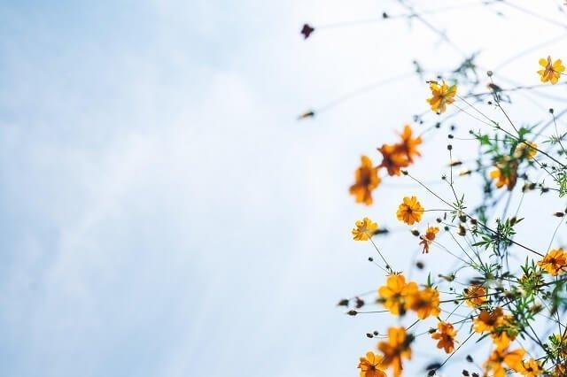 uitvaart regelen zon bloemen genieten